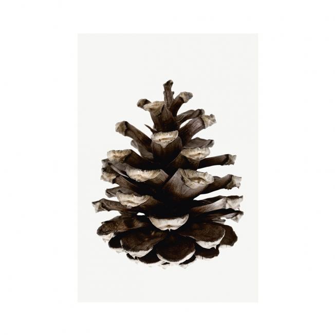 storefactory poster zapfen cone wunderschoen-gemacht