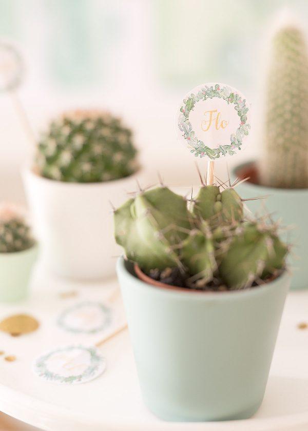kaktus-kakteen party-mitgebsel-kakteen-wunderschoen-gemacht