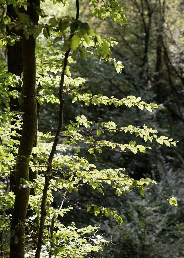 wald-im-septembersonne-wunderschoen-gemacht
