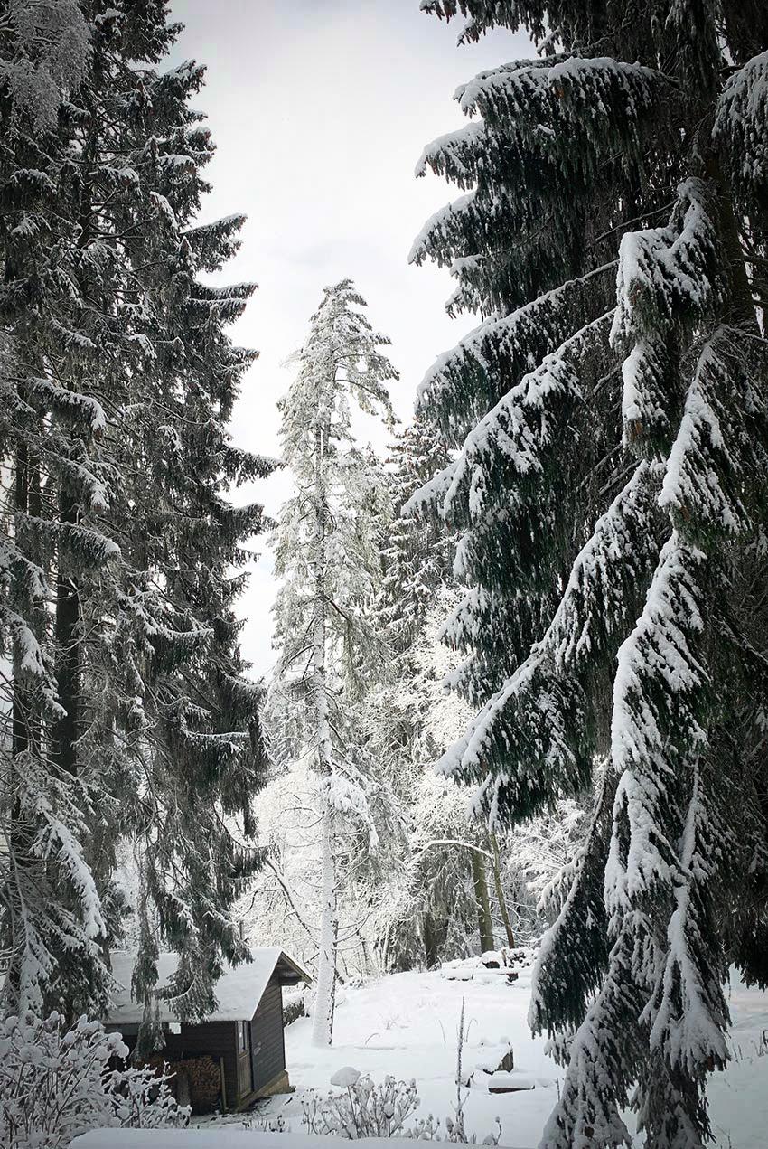 Winterwald-mit-huette-wunderschoen-gemacht-2
